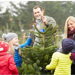 Over 12 Ways the WHOLE Family can Celebrate Christmas Together