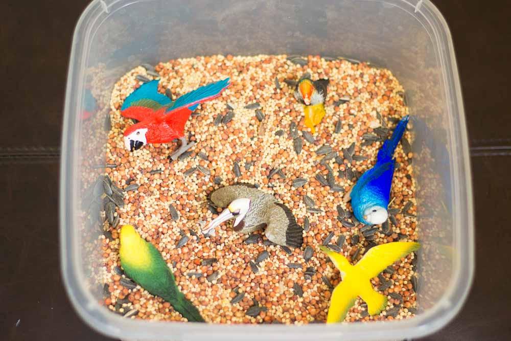 bird-seed-sensory-bin-1