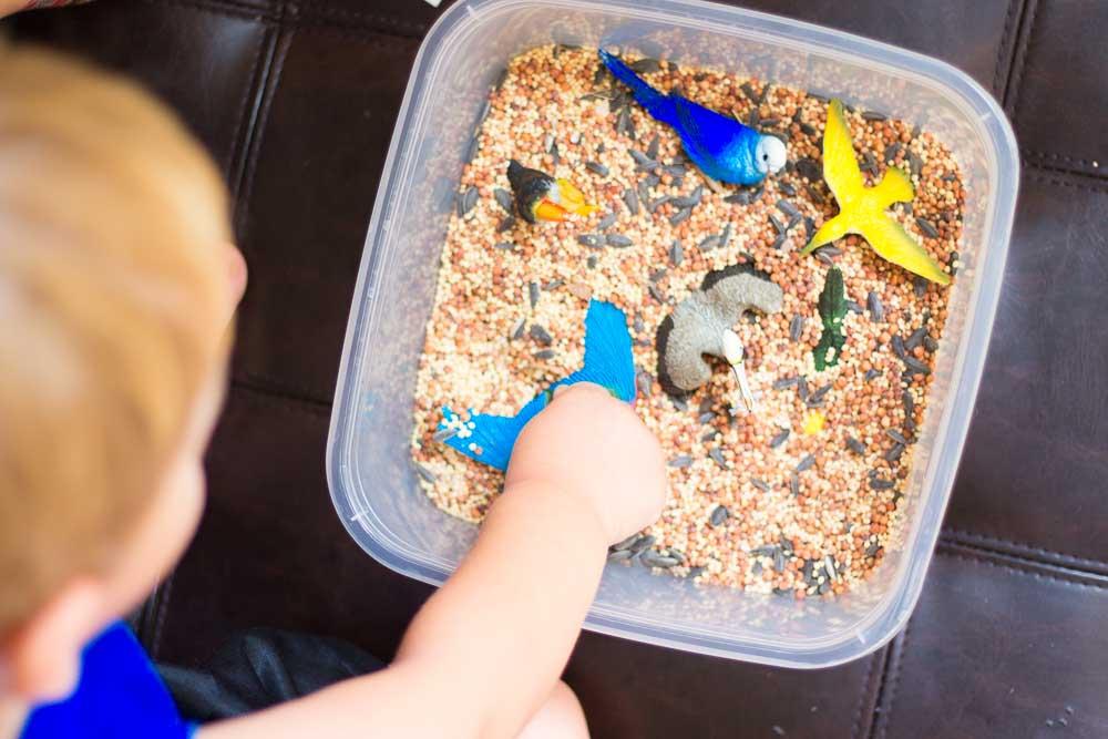 bird-seed-sensory-bin-3