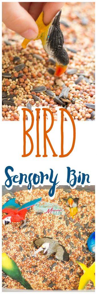 bird-seed-sensory-bin-pin