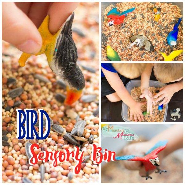 bird-seed-sensory-bin-sq